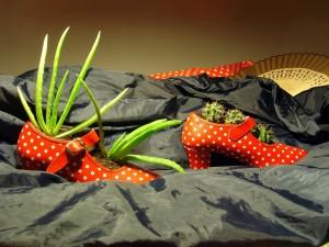 Cactus y aloe en los zapatos de flamenca