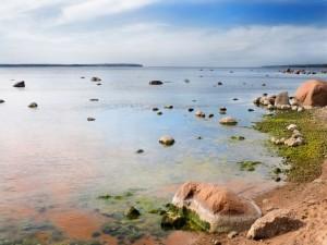 Piedras con musgo en el agua