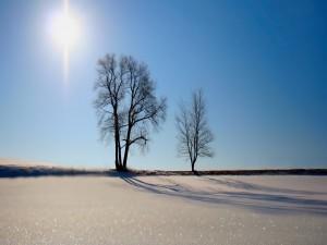 Postal: Radiante sol