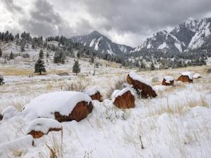 Rocas cubiertas de nieve