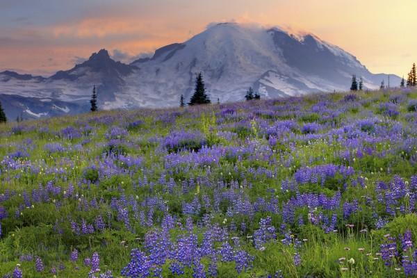 Flores lila en el prado