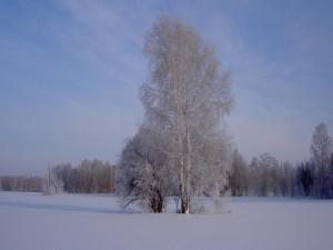 Postal: Árboles nevados
