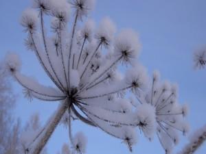 Planta cubierta de nieve