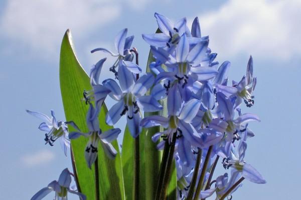 Flores azuladas y hojas verdes