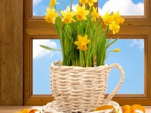 Flores amarillas, en una cesta frente a la ventana