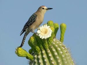 Pajarito sobre la flor de un cactus