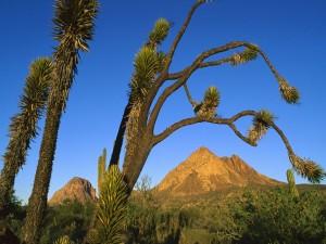 Cactus y árboles entre las montañas