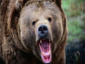 Postal: La boca del oso