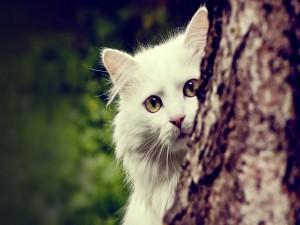 Gato blanco junto al árbol
