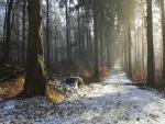 El sol ilumina el camino nevado