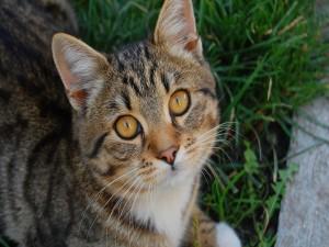 Postal: Gato con ojos bonitos