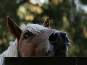 La cabeza del caballo