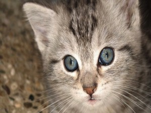Postal: Cerca del gatito