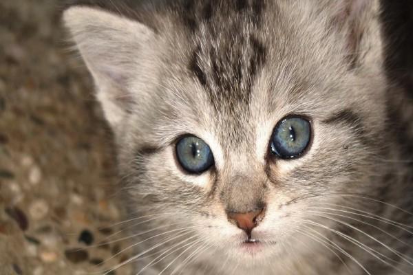 Cerca del gatito
