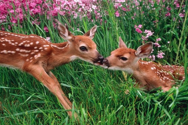 Dos animalitos mimosos entre la hierba