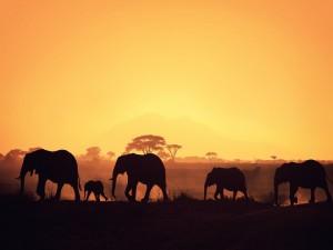 Elefantes caminando con los últimos rayos de sol