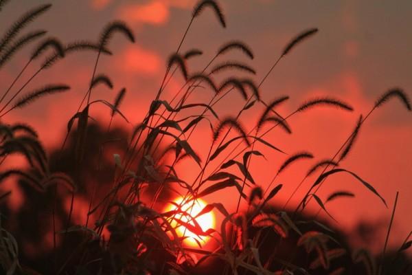 Salida del sol entre las hierbas
