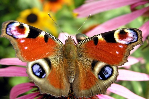 Vistosa mariposa de varios colores
