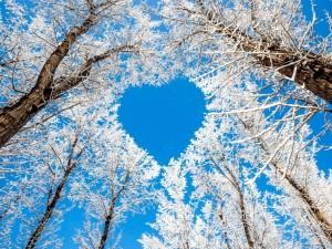 Postal: Ramas de un árbol formando un corazón