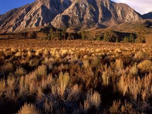 Plantas secas a los pies de la montaña