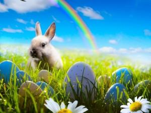 Postal: Conejito junto a huevos de Pascua