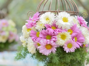 Postal: Crisantemos blancos y rosas en una jaula