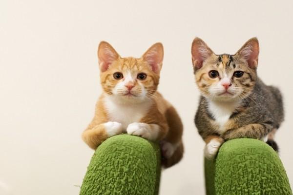 Dos gatitos mirando atentamente