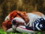 Perrito descansando sobre unas zapatillas