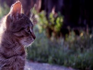 Postal: Gato de perfil