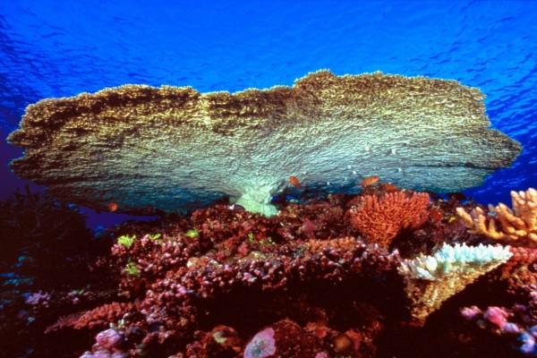 Pequeños peces entre el coral