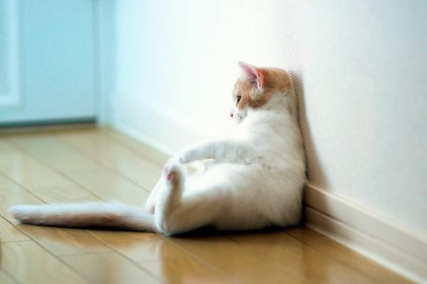 Gato apoyado en la pared