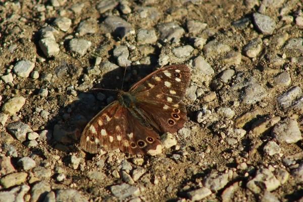 Mariposa sobre las piedras del suelo