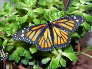 Mariposa sobre la planta