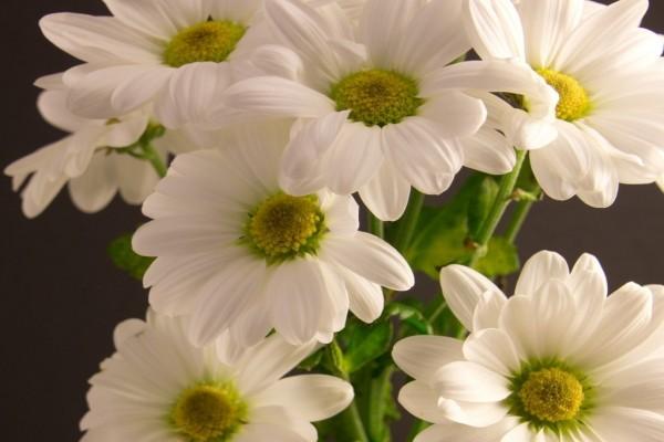 Ramo de flores con pétalos blancos