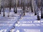 Árbol caído en la nieve