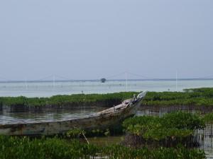 Postal: Manglar en Isla Pramuka, Indonesia