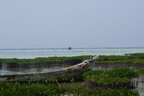 Manglar en Isla Pramuka, Indonesia