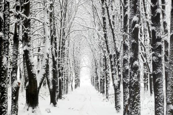 Caminando entre árboles y nieve