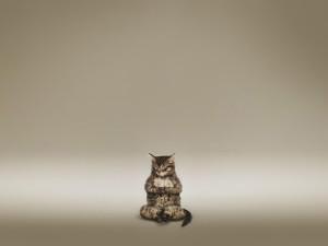 Postal: Gato meditando