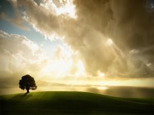 Los rayos del sol iluminando el árbol