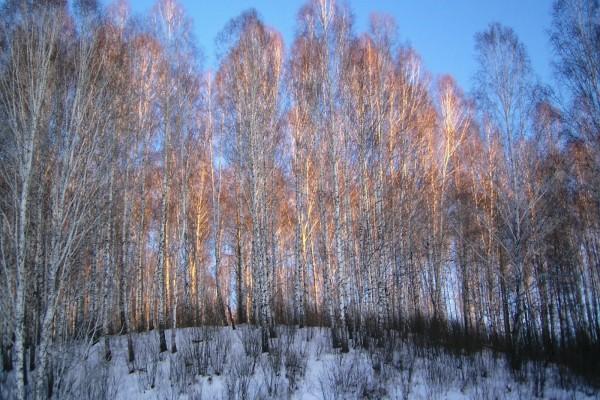 Nieve en la arboleda