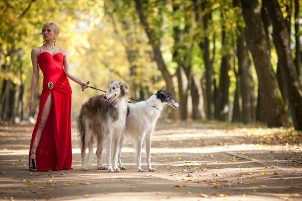 Elegante mujer, paseando perros en el parque