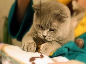 Gatito jugando con lana