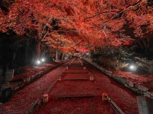 Postal: Hojas otoñales en el camino iluminado