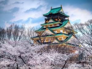 Castillo de Osaka iluminado