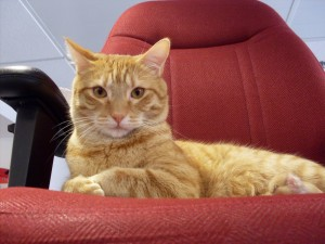 Postal: Gato en la silla del despacho