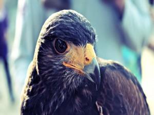 Postal: El ojo del halcón