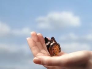 Postal: Mariposa en la palma de la mano