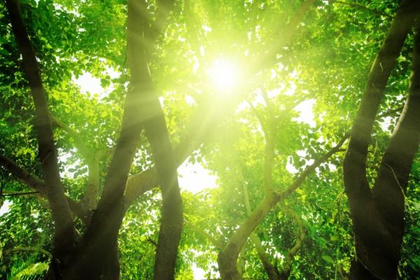 Árboles frondosos y el sol