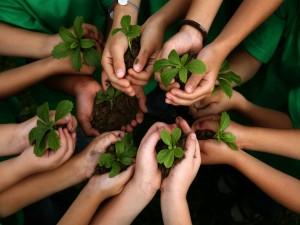 Postal: Día Internacional de los Bosques 21 de marzo